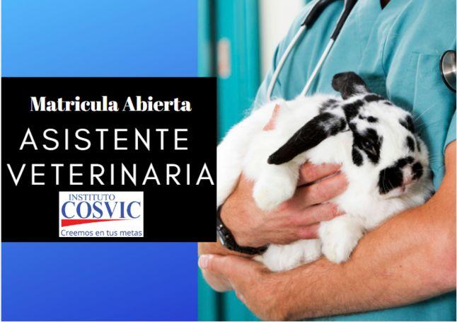 Curso Asistente Veterinaria