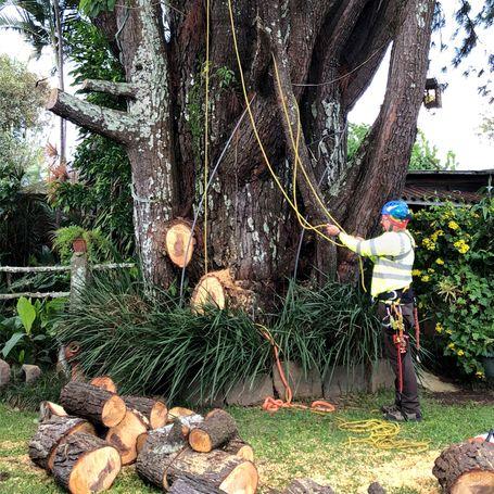 Podas de árboles, cortas de arboles, mantenimeinto de arboles 88379510